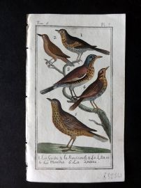 Buffon 1785 Antque Hand Colored Bird Print. Thrush, Redwing 5-7